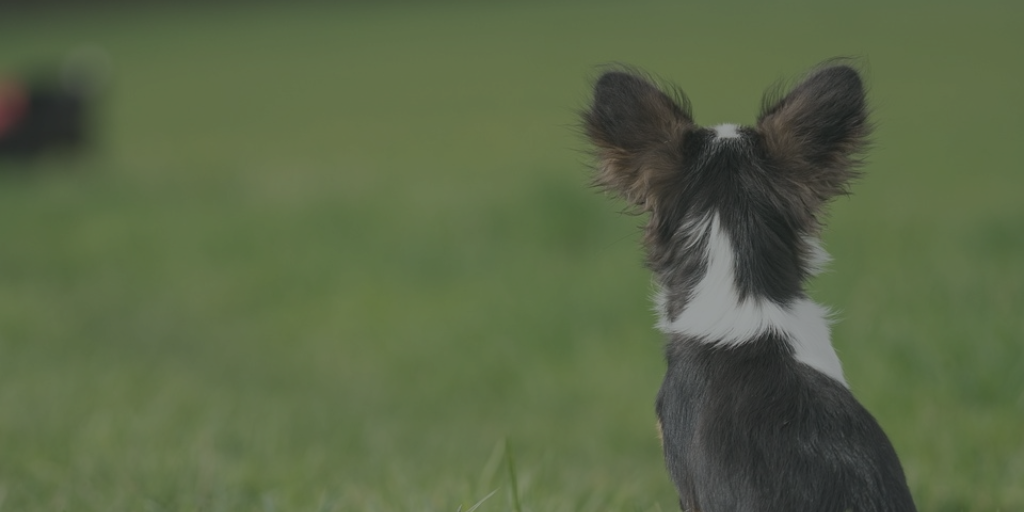 Before and Afters: Why they're a powerful tool for dog trainers