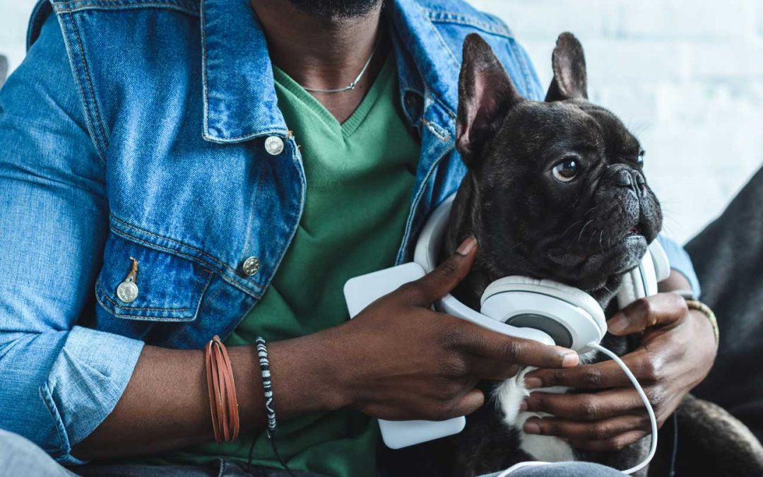 Podcast: Interviewed on Drinking From the Toilet about Marketing for Dog Trainers!