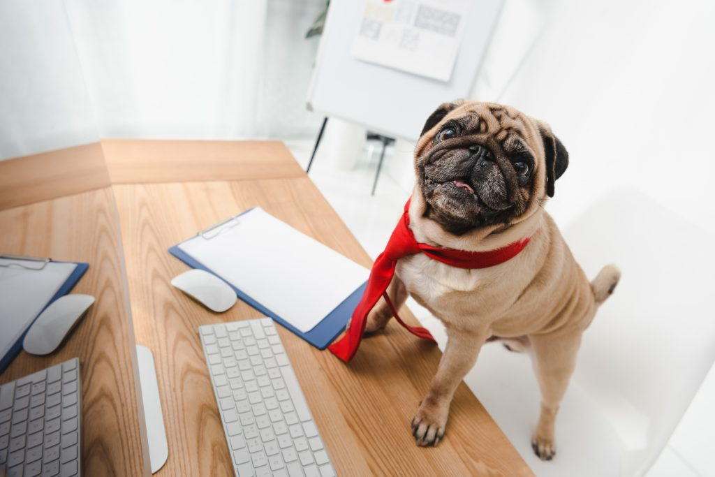 Dog in a tie at a desk writes copy for their website on a computer