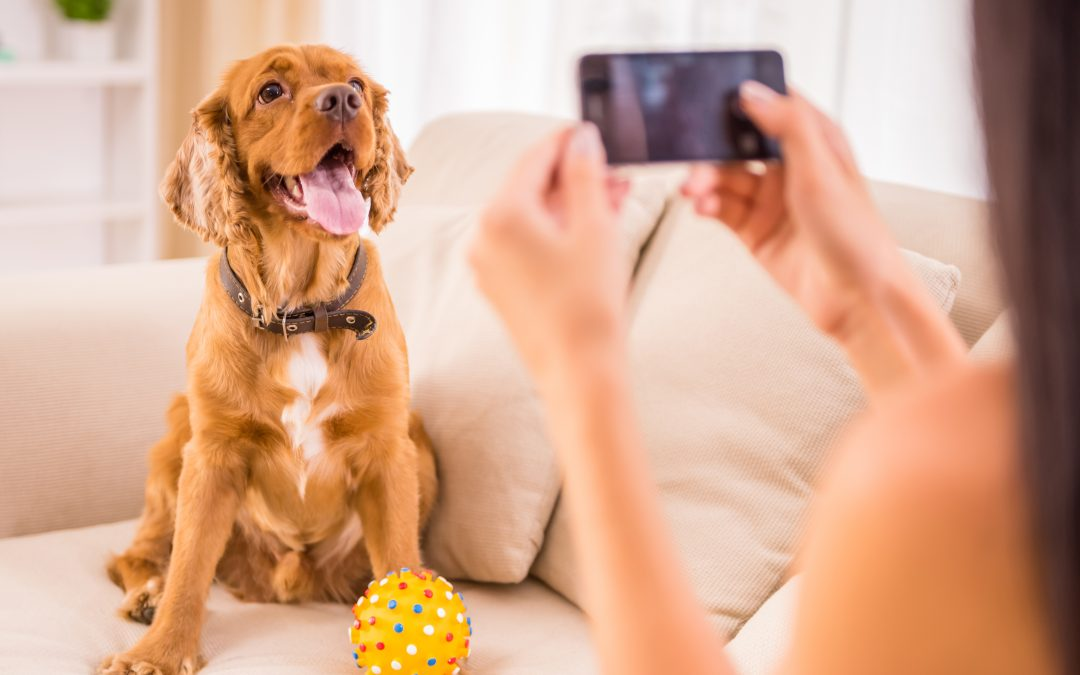 Phone Photography for Social Media: How to Take Photos Like a Pro