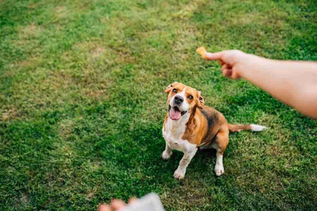woman feeds happy dog a treat article on marketing rewards