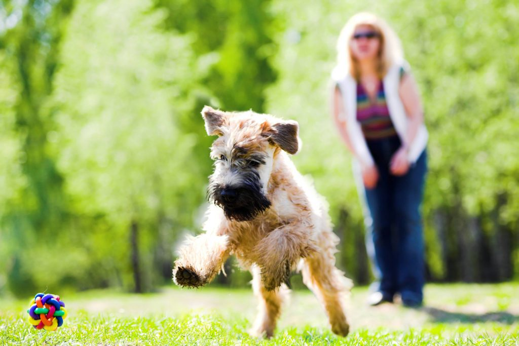 dog running on grass to retrieve ball thrown by woman; blog post on backchaining your marketing plan