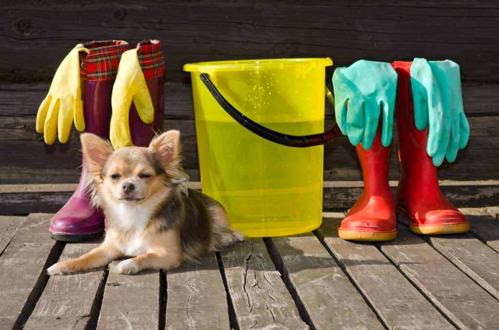 Dog with bucket full of water; blog post on fixing your customer acquisition and retention strategies