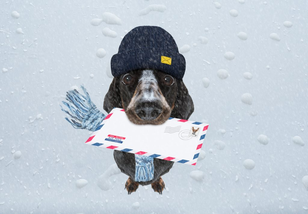 mail dog delivering an envelope, blog post on email opt-in strategies