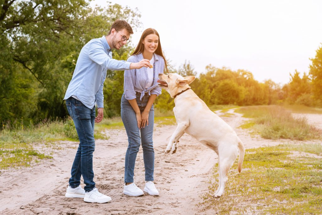 dog jumping for a treat; article on download incentives for dog trainers