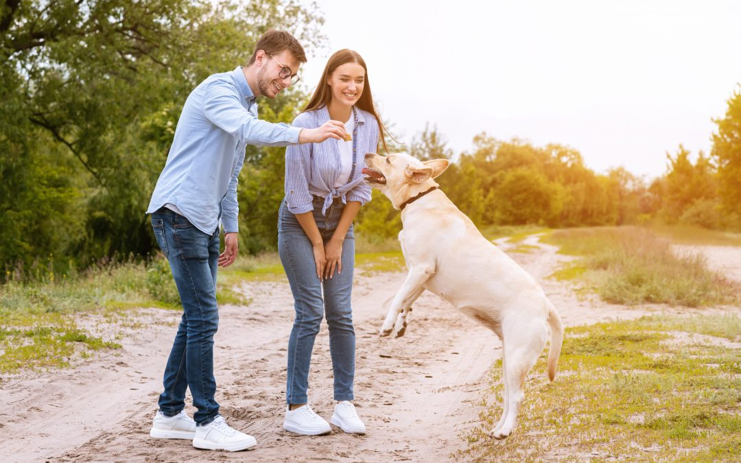 6 Ideas for Dog Trainer Download Incentives (and One For You!)