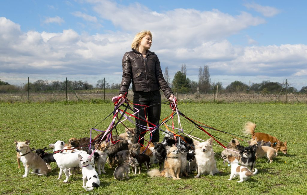 dog walker holding lots of dogs on leashes, blog post on how to make money in the dog training industry