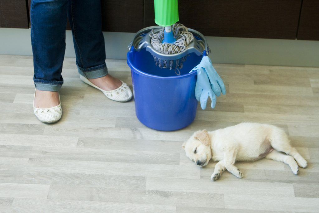 Person mopping while dog sleeps nearby; article on customer retention strategies