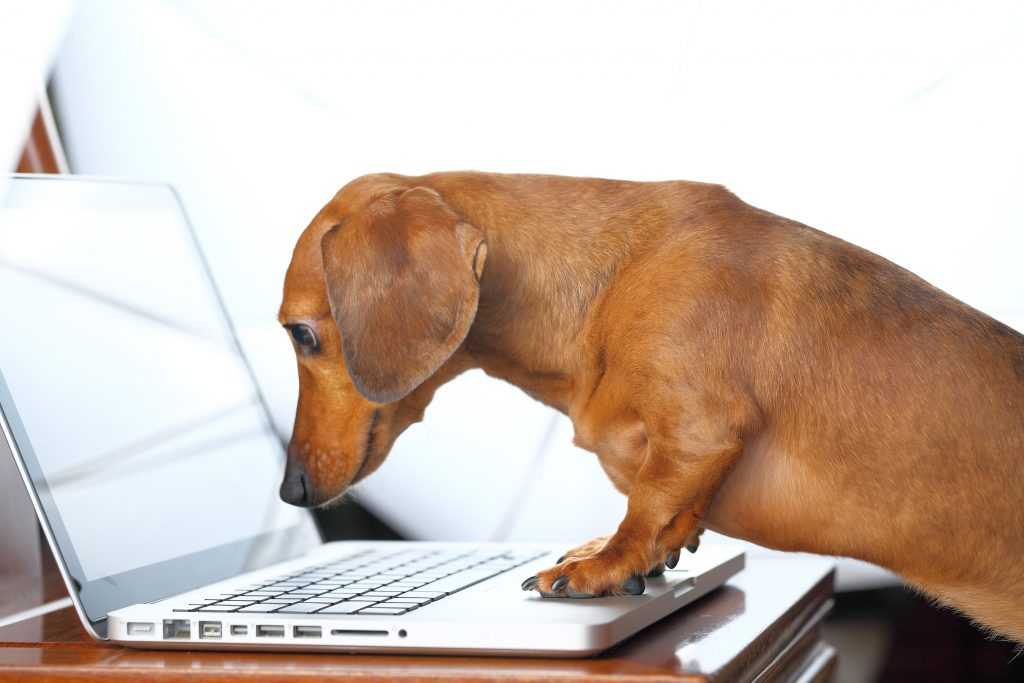 dog leaning over laptop computer keyboard; blog post on writing effective email newsletters