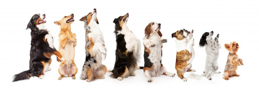 group of begging dogs; blog post on addictive copywriting