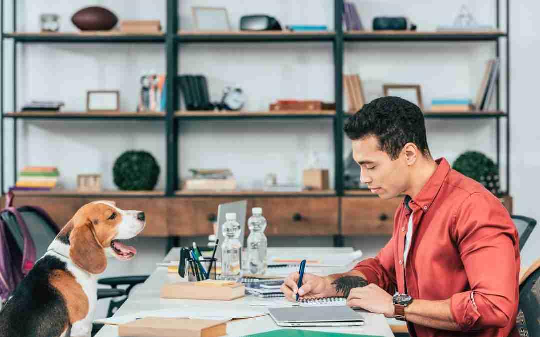 Dog Trainer Micro Tips for Addictive Copywriting #2: Create Novelty