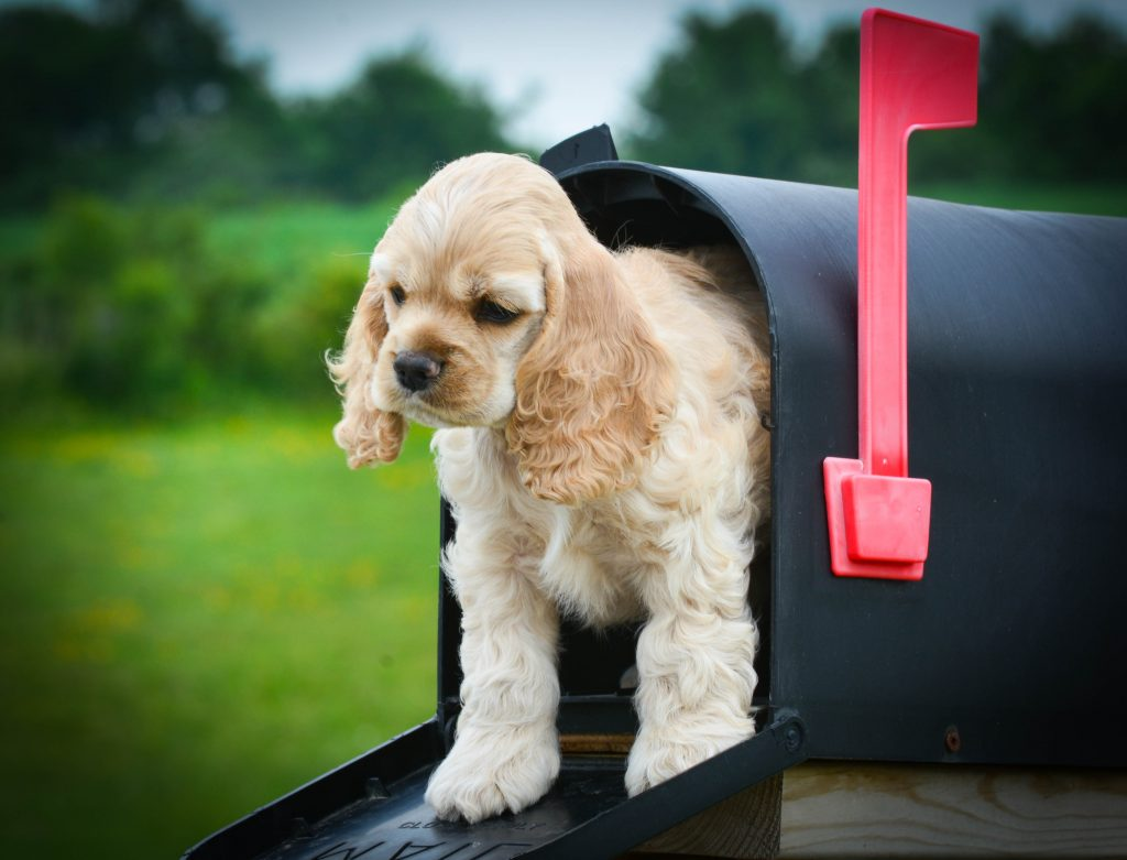 puppy peeking out from a mailbox; article on writing a check-in email