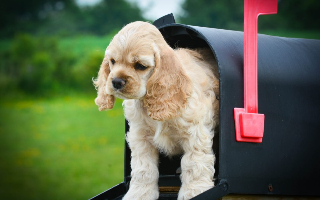 Words You Can Steal: A Check-In Email for Dog Trainers